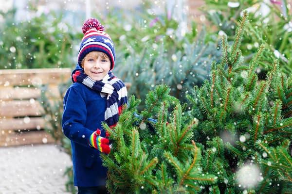 Мальчик выбирает елку