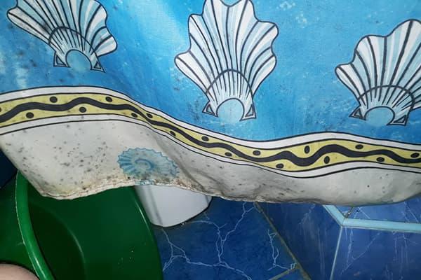 Плесень на шторке для ванной