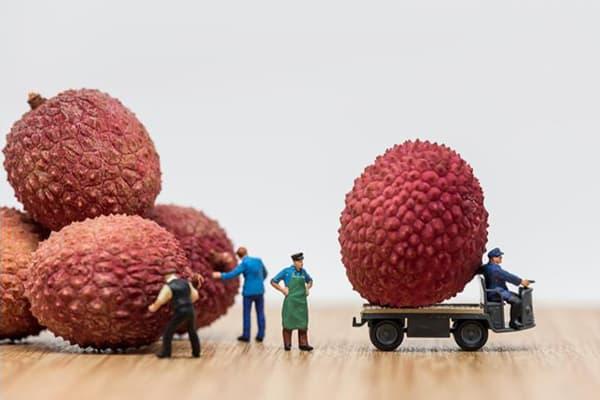 Композиция с плодами личи