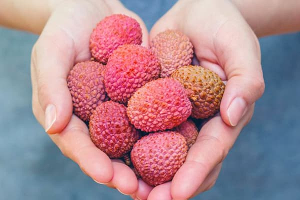 Горсть плодов личи в руках