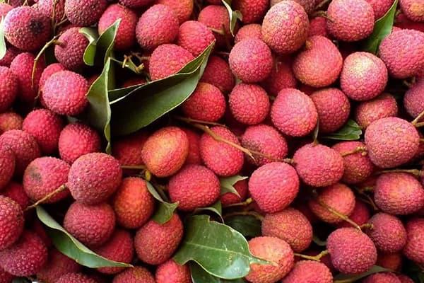 Свежесобранные плоды личи