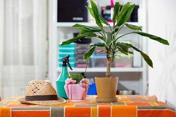 Комнатное растение на столе