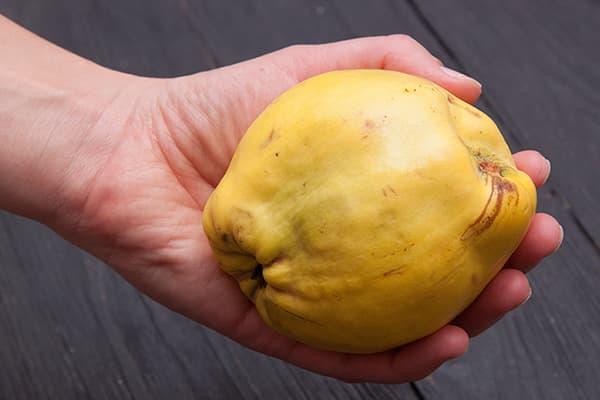 Женщина держит плод айвы