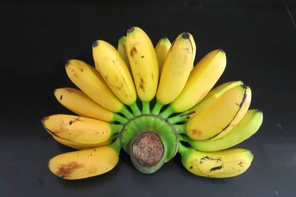 Бананы Dwarf Cavendish