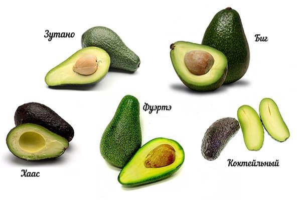 Разные сорта авокадо
