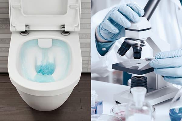 Исследование микробиологической среды в унитазе
