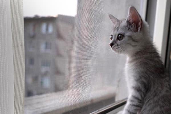 Кот у окна с москитной сеткой