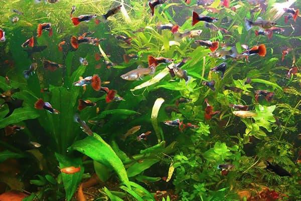 Много рыбок в аквариуме