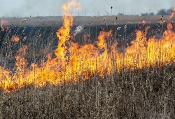 Пламя огня в поле