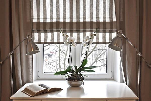 Цветущая орхидея у окна
