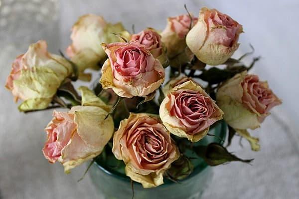 Засушенные розы