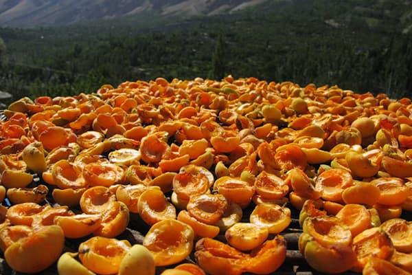 Сушка абрикосов на открытом воздухе