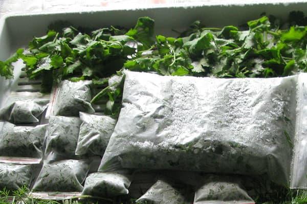 Заготовка зелени для заморозки