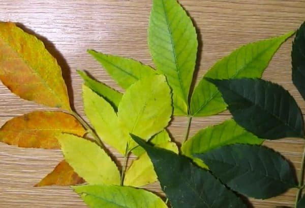 Листья для гербария