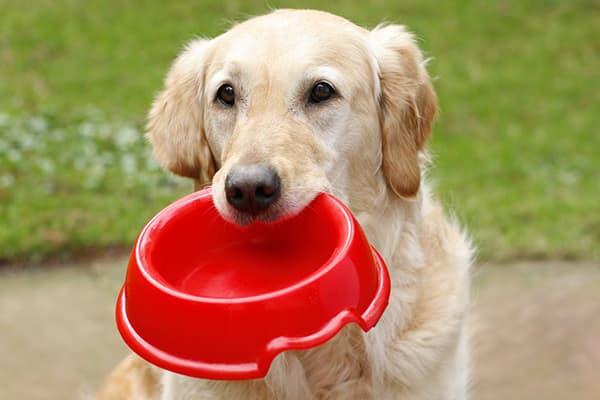 Собака держит в зубах свою миску для кормления