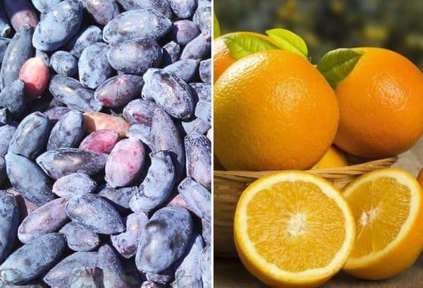 Жимолость и апельсины