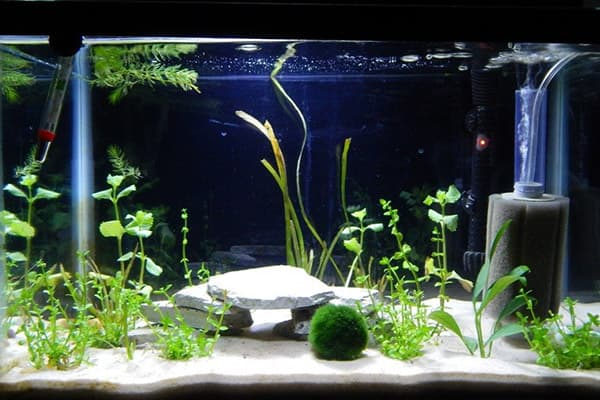 Грунт и водоросли в аквариуме