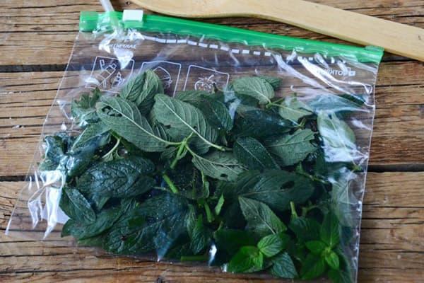 Листья мяты в зип-пакете
