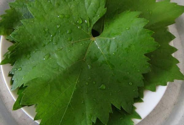 Промывка и обрезка листьев