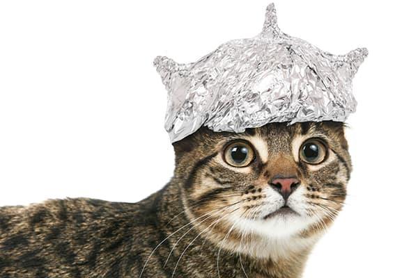 Кот в шапочке из фольги