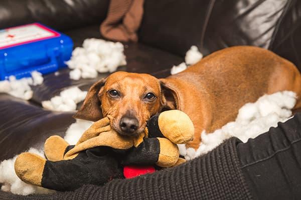 Такса с мягкой игрушкой
