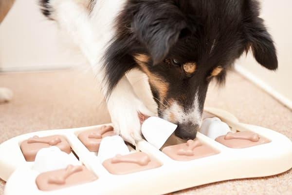 Собака с развивающей игрушкой