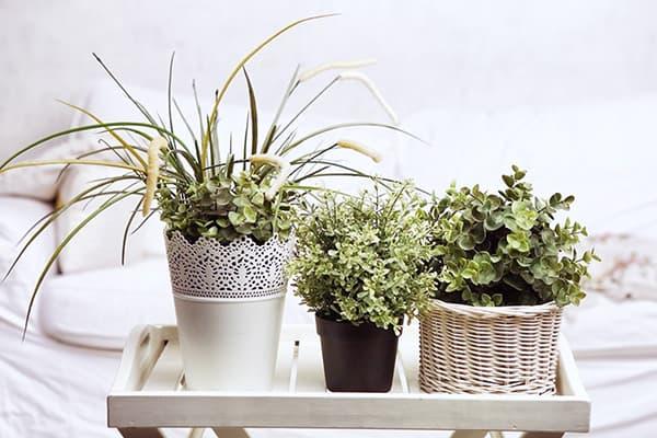 Растения в светлом интерьере