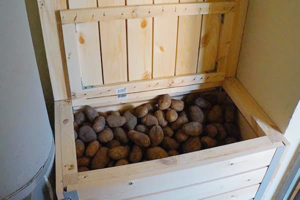 Ящик с картошкой на балконе