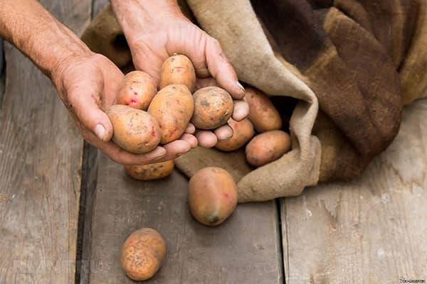 Хранение картофеля в мешке