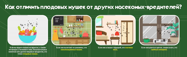Виды мошек в квартире