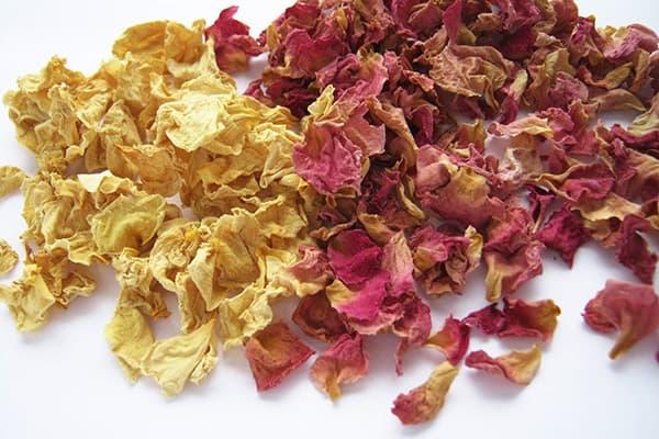 Лепестки цветков шиповника