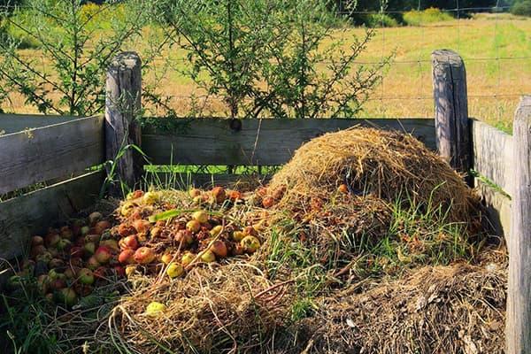 Яблоки в компостной куче