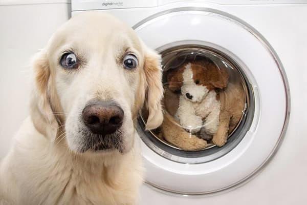 Собака возле стиральной машины