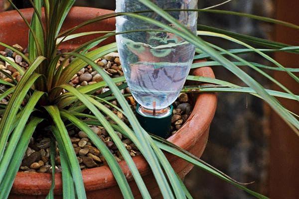 Автоматический полив из пластиковых бутылок