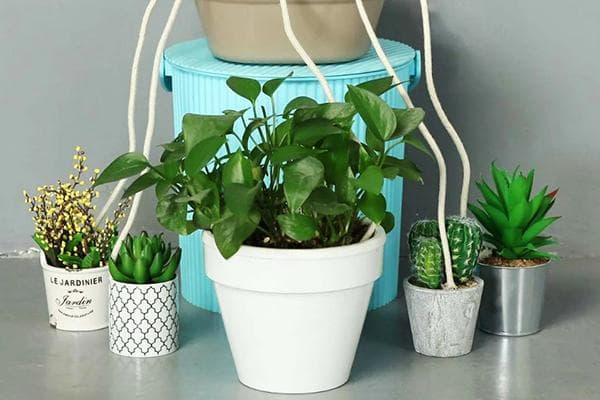Поливалка из нитей для комнатных растений