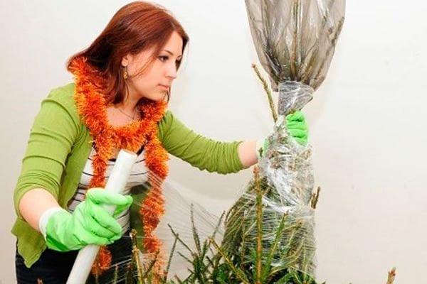 Женщина заматывает елку в пищевую пленку
