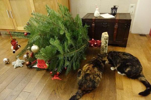 Коты свалили новогоднюю елку