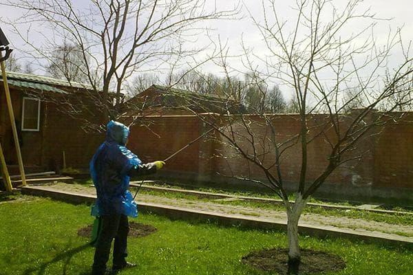 Опрыскивание деревьев на участке