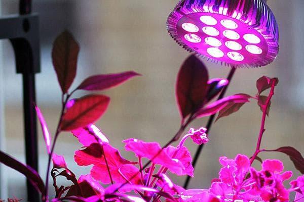 Растения под фитолампой