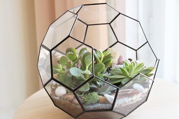 Флорариум из шестиугольников