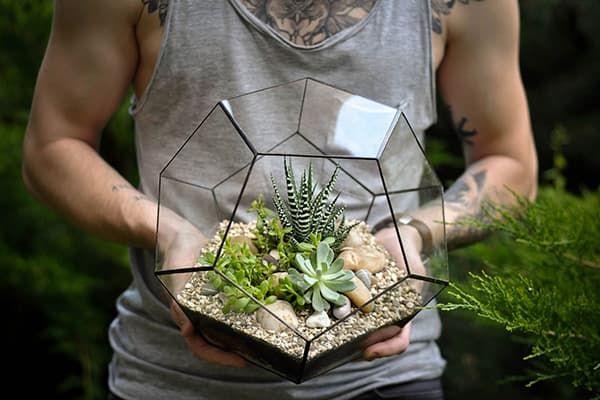 Геометрический флораруим с суккулентами