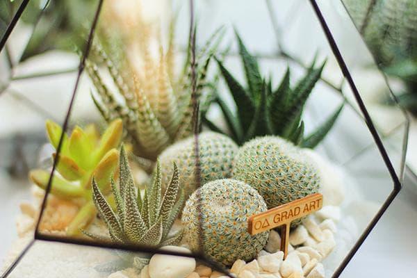 Кактусы и суккуленты во флорариуме
