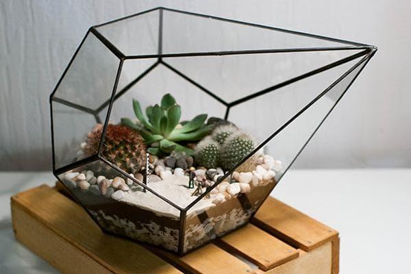 Геометрический флолрариум с суккулентами
