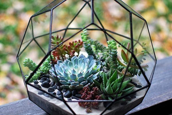 Красивый флорариум с суккулентами