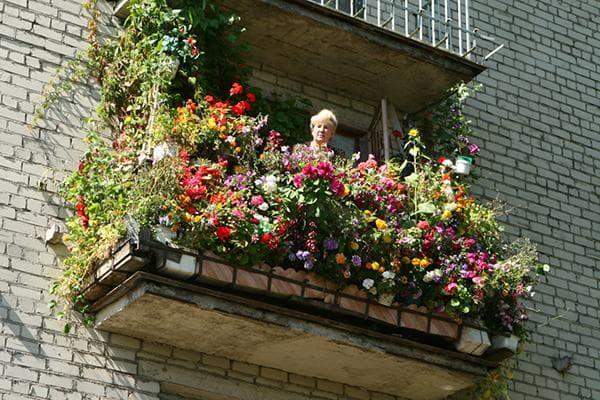 Женщина вырастила много цветов на балконе
