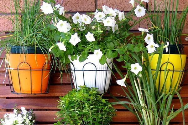 Цветы в горшках на стене балкона