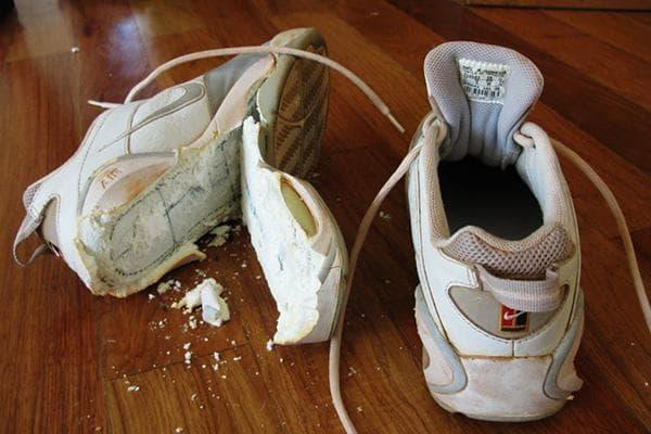 Раскрошилась подошва кроссовки после стирки