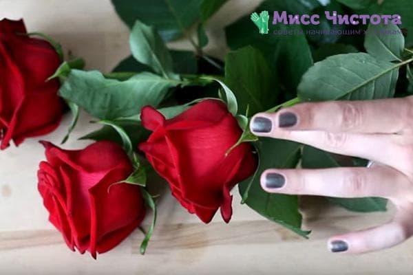 Красные розы из букета