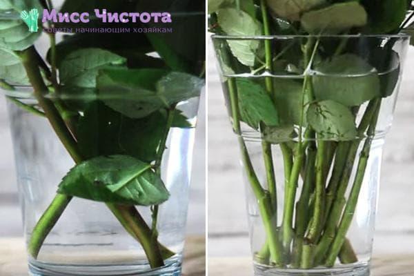 Удаление нижних листьев и шипов у роз из букета