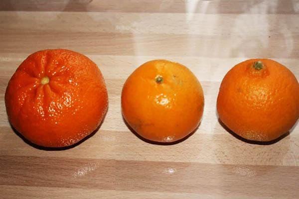 Три мандарина разных сортов